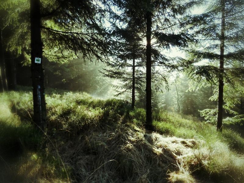 Waldstimmung im Hohen Venn, Belgien