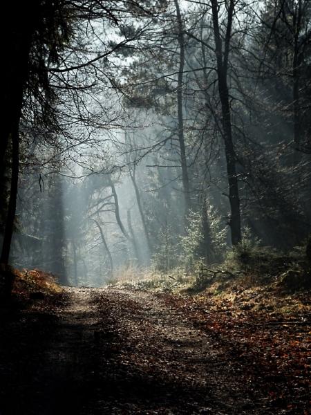 Waldweg im Winter bei Overath