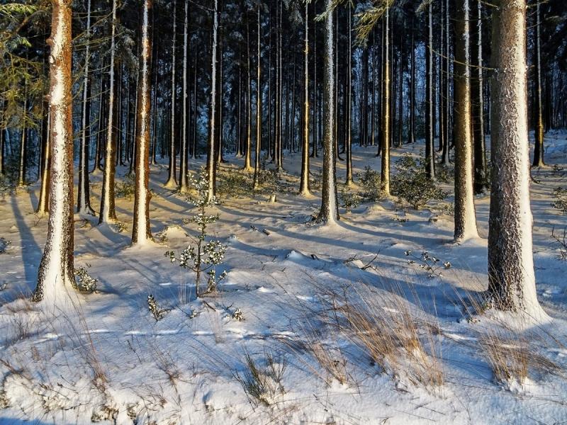 Winterwald am Kleien Heckberg bei Overath