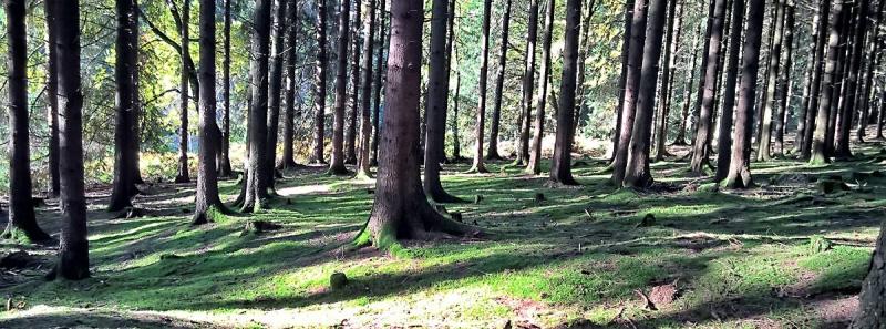 Wald  bei Overath