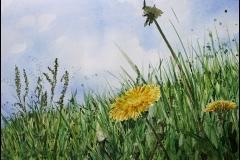 Sommerwiese mit Löwenzahn