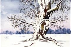 Baum im Winter - Eiche - Aquarell