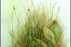 Großes Rasenstück nach Albrecht Dürer